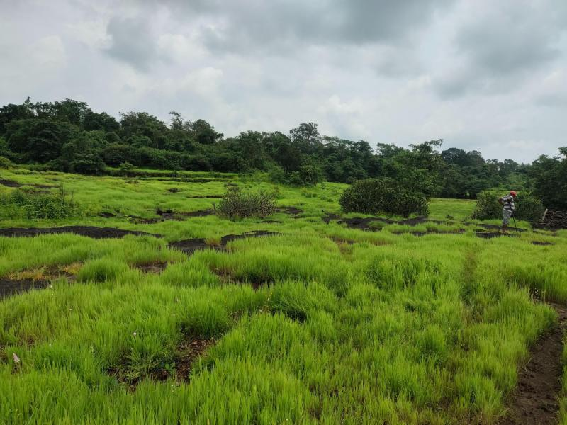 200 Acre Land for sale in Mahad Raigad - 1