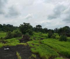 200 Acre Land for sale in Mahad Raigad - Image 4