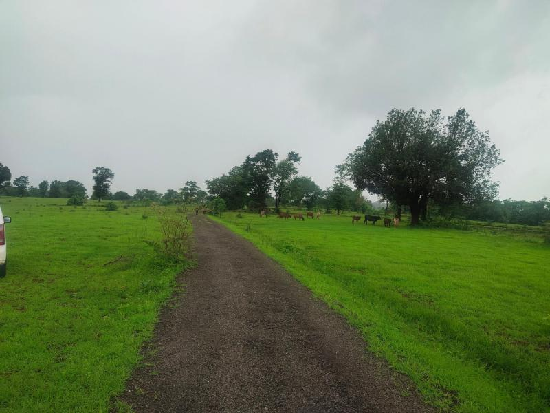 500 Acres land for sale in Nagaon Mahad - 2