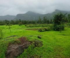1000 Acres Land for sale in Rupawali Tal Mahad - Image 2