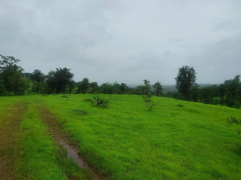 1000 Acres Land for sale in Rupawali Tal Mahad - 4