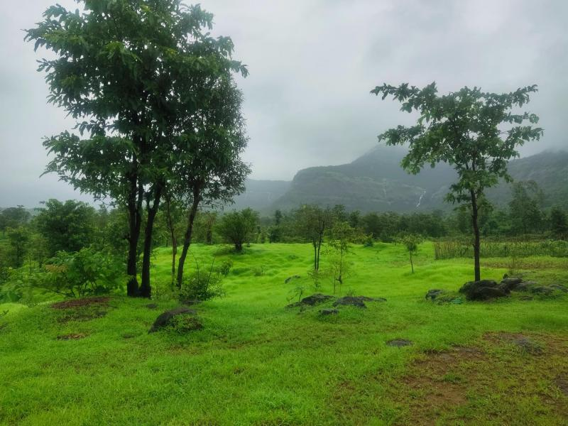 1000 Acres Land for sale in Rupawali Tal Mahad - 5
